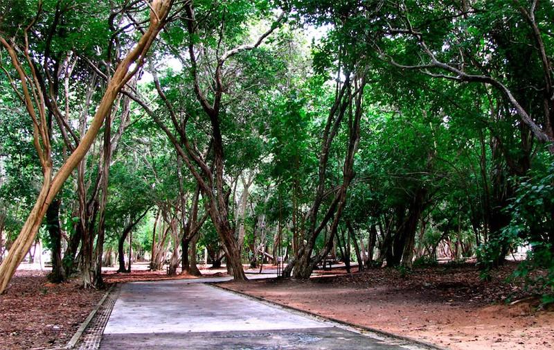 Parque Estadual das Dunas de Natal